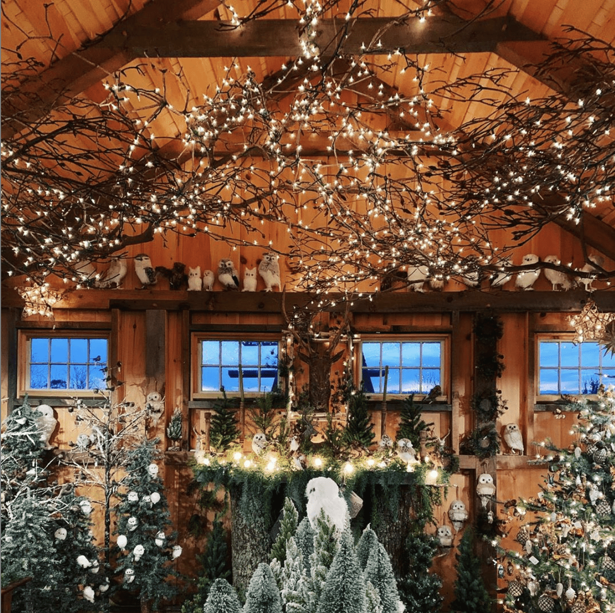 Timberrrrr! Best Places to Get a TreeThis Holiday Season